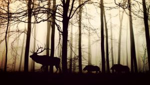 The Age of Man: Wilderness in the Anthropocene