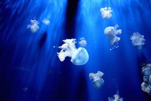 The mysteries of the sea - photo by sara-santandrea
