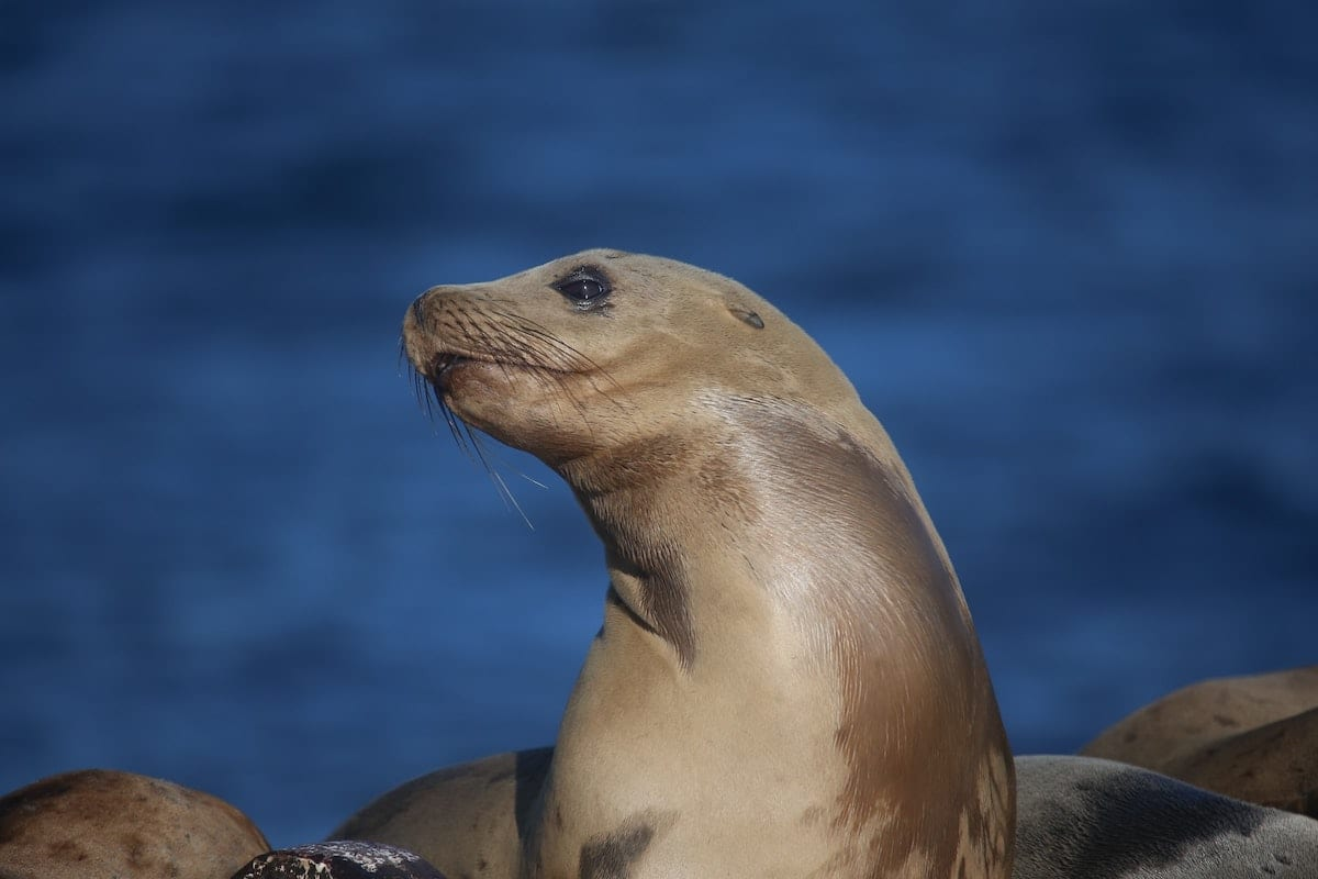 A sea lion poses for the camera. Protecting animals like this is just one of the many environmental rollbacks of a lame-duck President Trump.